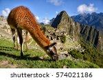 Llama In Front Of Machu Picchu...
