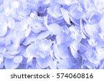 The Sweet  Hydrangea Flowers O...