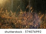 golden light with meadow  grass ... | Shutterstock . vector #574076992