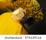 Crab Spider On The Flower ...