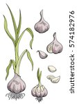 garlic graphic color isolated... | Shutterstock .eps vector #574182976