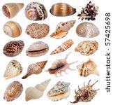 seashells on white background | Shutterstock . vector #57425698
