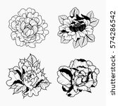 vector black and white peonies... | Shutterstock .eps vector #574286542