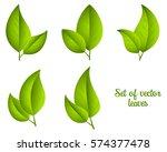 set of vector green leaves... | Shutterstock .eps vector #574377478