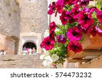 blooming petunias against the...   Shutterstock . vector #574473232