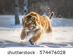 Siberian Tiger Running In Snow. ...
