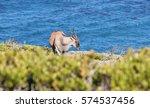 Eland Feeding On The Cliffs...