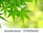 leaves of fresh green. leaves... | Shutterstock . vector #574556302