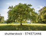 Big green tree in the park