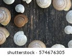 Snail Shell On Wood Background