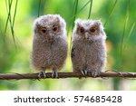 Stock photo baby owl 574685428