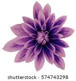 dahlia flower  pink violet blue ... | Shutterstock . vector #574743298