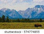 Buffalo in front of Mount Moran, Teton National Park, Wyoming