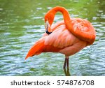 Elegant Pink Flamingo Cleaning...