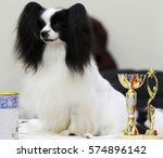 Continental Toy Spaniel At Dog...