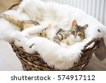 Stock photo cat 574917112
