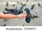 Two Pigeons Feeding And...