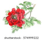 chinese traditional hand... | Shutterstock . vector #574999222