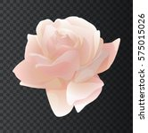 Beautiful Pink Rose On A...