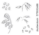 hand drawn set of oats  oatmeal ...   Shutterstock .eps vector #575031688