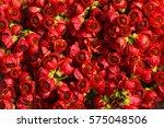 beautiful red flowers... | Shutterstock . vector #575048506