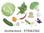 vegetables and herbs vector... | Shutterstock .eps vector #575061562