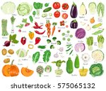 big set of colored vegetables.... | Shutterstock .eps vector #575065132