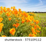 California Poppy Flower In An...