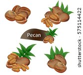 pecan kernel in nutshell with... | Shutterstock .eps vector #575114422