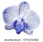 orchid blue white  flower.... | Shutterstock . vector #575151082