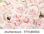 Stock photo pink rose for backgrounds 575180002