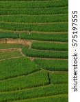 terraced fields in northern... | Shutterstock . vector #575197555
