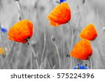 Wildflowers Poppies Selective...