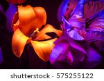 tulips in the night light.... | Shutterstock . vector #575255122