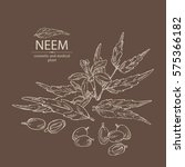 background with neem  leaves... | Shutterstock .eps vector #575366182