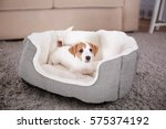 Cute Funny Puppy In Dog Bed At...