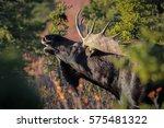 profile of an impressive male... | Shutterstock . vector #575481322