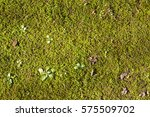 Texture Of Moss And Leaves
