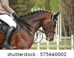 Stock photo beautiful sport horse portrait in horse show 575660002