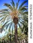 lines of palm trees against... | Shutterstock . vector #575694322