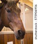 horse   Shutterstock . vector #575906956
