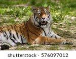 tiger | Shutterstock . vector #576097012