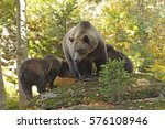 brown bear into the forest | Shutterstock . vector #576108946