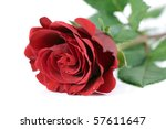 Single Red Rose Close Up On A...