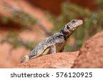 chuckwalla   12 | Shutterstock . vector #576120925
