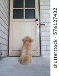 hybrid dog is waiting for...   Shutterstock . vector #576127432