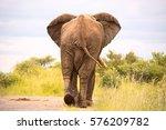 African Bull Elephant Strolling ...