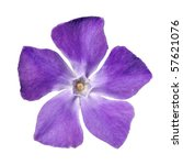 Top View Of Periwinkle Purple...