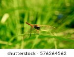 Large Dragonfly Sitting On A...