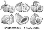 set of illustrations of fruits... | Shutterstock .eps vector #576273088